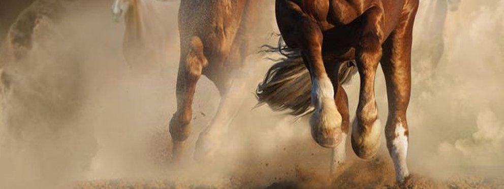Ruta a caballo Hotel Essentia, Aracena (Huelva).